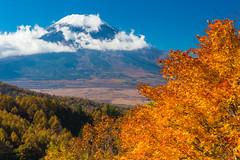 Fuji and autumn leaves (shinichiro*) Tags: november autumn japan fuji  crazyshin yamanashi 2014   afsnikkor2470mmf28ged order500 nikond4s