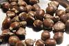 IMG_0318 (padrehugo) Tags: e boas trancoso magusto quentes convivio quenteseboas cogula