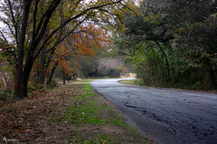 Lancaster (McKenzie's Photography) Tags: road street travel red black color tree nature leaves landscape outside leaf branch outdoor top country crack trunk canopy lancastertx