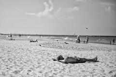 (Alan Schaller) Tags: leica white black beach alan 50mm israel tel aviv summicron and monochrom schaller