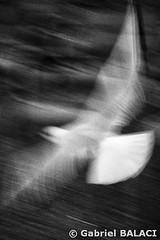 oiseau_Snapseed (Gabriel Balaci Photographies) Tags: people paris france birds europe fineart colorphotography streetphotography snapshots technicolor rue couleur gens oiseaux urbain blackandwhitephotography photoderue photographienoiretblanc photocouleur photographieartistique instantanés fotografiealbnegru fotografieartistica