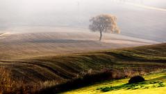 luce autunnale (raffaphoto©) Tags: campagna autunno conero luce marche ancona