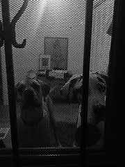 298/365 (moke076) Tags: door vegas atlanta bw dog pet dogs oneaday animal mobile georgia grid great guard attack cellphone cell moose security photoaday dane 365 vicious iphone 2014 project365 365project vsco cabbagetwon vscocam