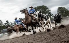 EU Meisterschaft Westernreiten-126.jpg (Setekh81) Tags: thüringen em teampenning westernreiten einöd