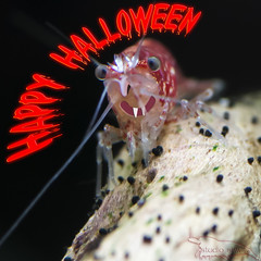 Happy Halloween (Studio Skwit) Tags: red test macro art halloween nature water animal animals photoshop wow studio happy aquarium crazy cool nice nikon aqua flickr experimental vampire creative shrimp manipulation special cc horror steven xxx try nano holliday shrimps acuario facebook hallowee aquaria wooow twitter d7100 crevet startcafe creativecloud skwit studioskwit stevensquid