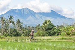 Mt Agung (M.Bob) Tags: trees sky people bali mountain man mountains green nature field indonesia landscape asian volcano countryside highlands asia southeastasia outdoor hill working scenic hills worker farmer ricepaddies gunung agung beautyinnature mtagung traveldestination