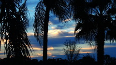 Sunrise October 22nd. (Jim Mullhaupt) Tags: pink blue trees wallpaper sky sun color weather silhouette yellow clouds sunrise palms landscape nikon flickr florida coolpix bradenton p510 mullhaupt jimmullhaupt