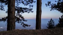 The Lone Pines (alexx4444) Tags: wallpaper mist fog night samsung calm pines lone blagoevgrad nx2000