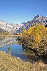 Perspective en rousseur (luka116) Tags: berg montagne automne schweiz switzerland suisse swiss lac svizzera foret moutain octobre montagnes vaud 2014 lesdiablerets derborence