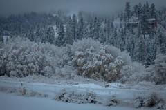 First snow of the 2014-2015 winter season at Bear Mountain in Big Bear Lake, California.