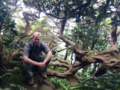 The Cloud Forest atop Mt Gower (JustinField-Greens) Tags: marinepark lordhoweisland ballspyramid mtgower