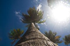 DSC_0027 (@giovanicordioli | gmcordioli@gmail.com) Tags: trip vacation nature paradise peace natureza frias peaceful barbados caribbean caribe beutiful natgeo visitebarbados visitbarbados