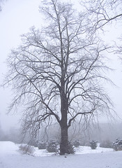 Mist (shumpei_sano_exp7) Tags: naturewatcher multimegashot