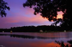 Domaine de la Dombes au coucher du soleil (Pito Charles) Tags: sunset lake france french soleil pond coucher lac domaine étang etang ain dombes