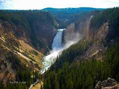 The Mighty Yellowstone Carving the Canyon (ronellis.photo) Tags: river waterfall rapids gorge yellowstone