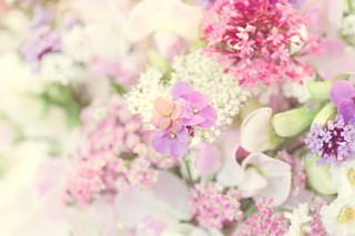 wall flower still life