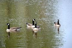 Naturaleza (Juan Enrique Gilardi) Tags: park naturaleza tree nature birds ro river rboles aves parques