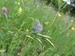Butterfly 510 (+360000 views!) Tags: butterfly papillon borboleta mariposa farfalla schmetterling