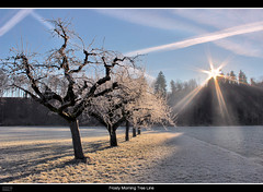 Frosty Morning Tree Line (VandenBerge Photography) Tags: trees winter sky sun nature canon landscape eos schweiz switzerland frost thun lonelyplanet sunrays nationalgeographic dlsr 600d fantasticnature cantonberne thebeautyofnature