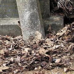 Bishopwearmouth Cemetery, Sunderland (davewebster14) Tags: autumn graveyard deadleaves sunderland bishopwearmouthcemetery