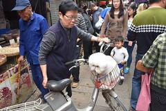 Street scene with dog in bicycle basket - Suzhou market (stevelamb007) Tags: china people dog bicycle nikon suzhou market crowd streetscene crowded nikkor18200mm stevelamb d7200