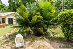 DSC03237 (DocSlyper) Tags: nigeria lcc lekki lekkiconservationcentre