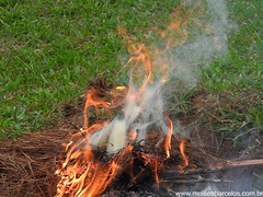 DSCN2496 (moisesbarcellos) Tags: life book power dancing flames books burn firedancing ember fier