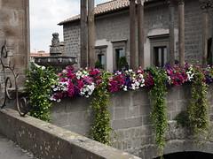 Viterbo_11_1240 (Dubliner_900) Tags: flower fountain olympus fontana viterbo lazio tuscia micro43 omdem5markii mzuikodigitaled1240mm128pro