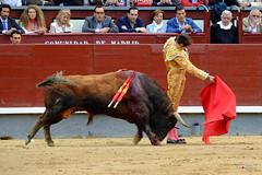 Andres Roca Rey (Fotomondeo) Tags: madrid espaa spain bull bullfighter toros bullfight toro bullring matador torero plazadetoros corridadetoros lasventas fujifilmxm1