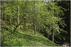 göhl 253 (beauty of all things) Tags: creek belgium bach belgien geul raeren göhl göhltal lagueule gostert