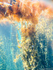 Forest under the sea (Laura McCance) Tags: sea seaweed underwater hiddenworld