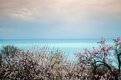 Spring (andrassudy) Tags: flowers nature landscape spring hungary balaton d5100