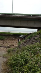 20160623_131719 (Keep Wales Tidy) Tags: bridge summer up coast marine severn clean litter learning monmouth welsh care baccalaureate caldicot rogiet welshcoastalpathcleanup