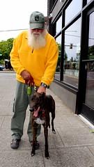 Who rescued who? (mightyquinninwky) Tags: seattle rescue dog greyhound man hat beard washington sidewalk storefront ballard seattlewashington rescuegreyhound yellowfleece walkingseattle ourseattle ourseattlevodka ourseattlevodkaliquorstore