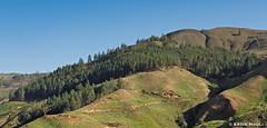 Valley of Petaquire / Valle de Petaquire