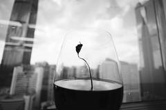 growing tea leaf (Salmonpink) Tags: 15mm vcsuperwideheliar sony a7r stilllife teacup closeupadapter leica mmount explored inexplore