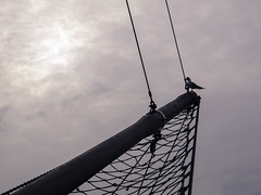 harbour sky (Kerryjal) Tags: sea sky black gull wells next headed albatross