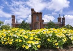 Smithsonian Castle & Garden (8230This&That) Tags: flowers castle garden washingtondc dc smithsoniancastle enidahauptgarden
