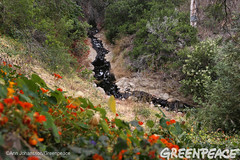 Oil Pollutes Neighborhood (Greenpeace USA 2016) Tags: oil spill pipeline fossilfuel ventura california pollution cleanup crude ca usa