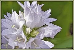 _JVA7651_DxO (mrjean.eu) Tags: park pink blue white france flower macro fleur rose yellow fleurs jaune garden rouge nikon jardin vert bleu botanic lorraine botanique parc metz 105mmf28 flowerws grteen