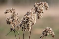 (ds325) Tags: spring wiosna polska poland