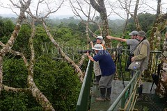 60071601 (wolfgangkaehler) Tags: 2016 southamerica southamerican ecuador ecuadorian latinamerica latinamerican rionapo rionapoecuador rionaporiver rainforest coca cocaecuador laselvalodge observationtower tower people person tourism tourist rainforestcanopy