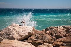 La mouette (Yannick 67) Tags: agit baignade vague 70d cte oiseau bleu turquoise animal provence houle rocher france azur mer menton canon mditerrane mouette alpe