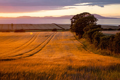 sunset_field_walking_3961 (allybeag) Tags: sunset fields solway cumbria crosby