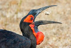 frica (Juan Di Lullo) Tags: 2015 accion africa ave kruger naturaleza sudafrica viaje