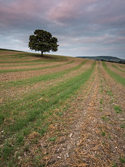 Pyrtle Valley Tree (Damian_Ward) Tags: damianward photography ©damianward buckinghamshire pyrtle valley bucks tree rural countryside landscape field fields