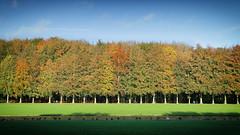 Autumn Colors parade (JanDC (Jan)) Tags: park autumn belgium tervuren flanders flemishbrabant tervurenpark