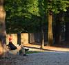 LETTURA con RAGGIO SOLE SERALE MURA TREVISO (aldofurlanetto) Tags: mura sole lettura treviso serale ottobre