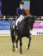 FEI Grand Prix, Internationale Dressurprfung Klasse S, Dressurreiten, Dressage, Oldenburg 2014 (horseandbikeride) Tags: sam 85mm 2014 80mm dressage dressurreiten feigrandprix