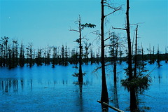 Blue  Bayou (a455s2008RWM) Tags: blue trees lake water sunrise bayou cypresstrees